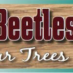 BARK BEATLES….are your trees at risk?
