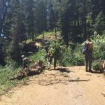 Toll Canyon Fire Mitigation Project